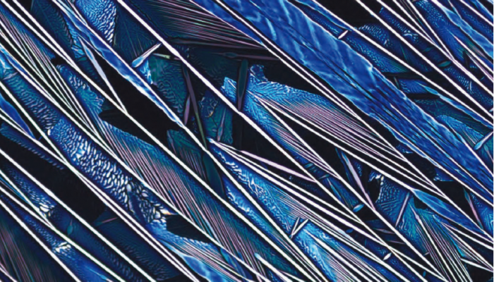 Feathers of Ocean by Prapti Kafle(2019), 2019 SCS Science Image Challenge Finalist